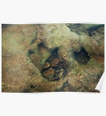 Dinosaur Tracks in the River Poster