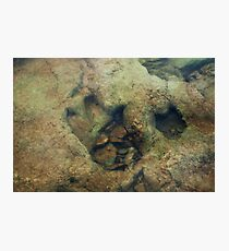 Dinosaur Tracks in the River Photographic Print