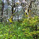 a dark and rainy forest... by Allan  Erickson
