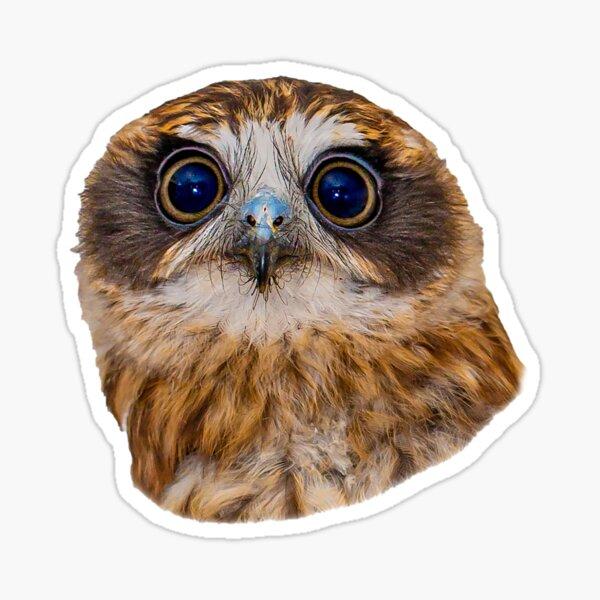 Hypnotic Eyes of a Boobook Owl Sticker