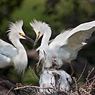 Snowy Egret Family by Bonnie T.  Barry