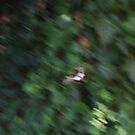 Orchard Swallow Tail, in Flight by Gregory John O'Flaherty