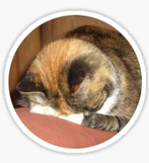 Calico Cat playing hide and seek Sticker