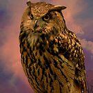 Owl by browncardinal8