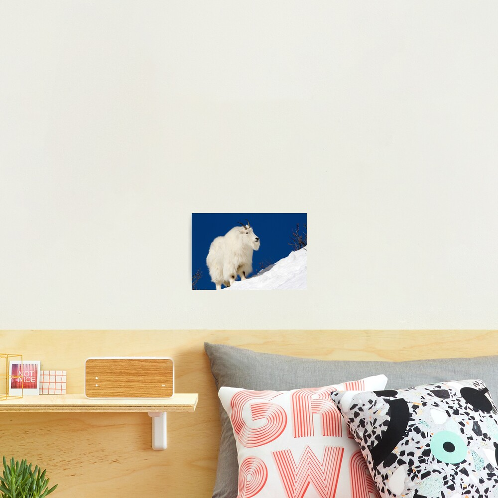 Mountain Goat On Blue Photographic Print