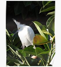 White Beauty - Belleza Blanca Poster