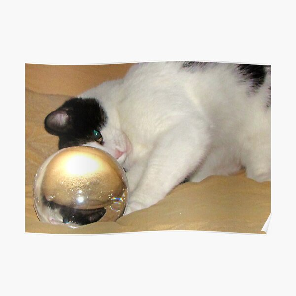 Super Lindo Cheeky Blanco Tom y Jerry Mascota Gatito Gato Collar de seguridad campana