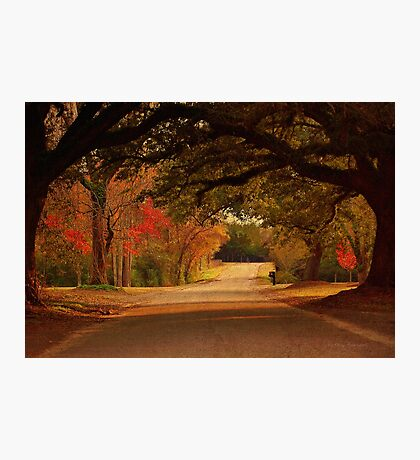 Fall Along A Country Road Photographic Print