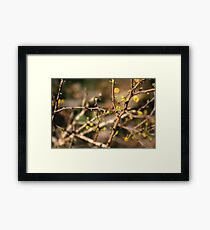 Color in the Brush Framed Print