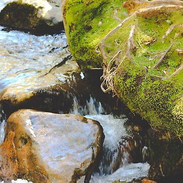 Moss Overtakes de AmberRoques