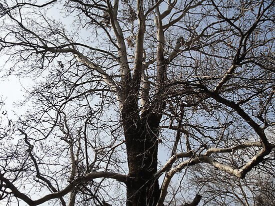 Old Tree Without Leaves by Manish Yadav