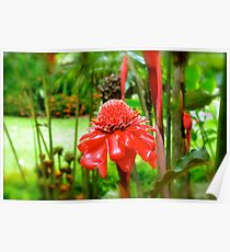 Red Torch Ginger Lily Poster
