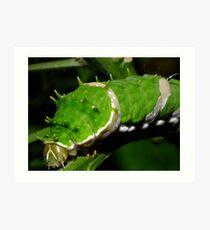 Orchard Swallowtail Caterpillar Art Print