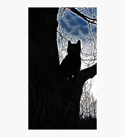 Stalker Kitty Photographic Print