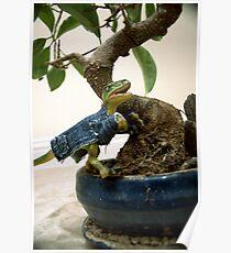 Bonsai Raptor Poster