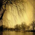 Weeping Willow © by Dawn Becker
