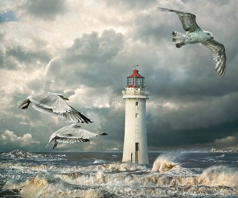 Gulls at Perch Rock by Brian Tarr