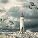 Gulls at Perch Rock by Brian Tarr