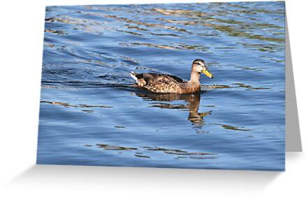 Pretty female Mallard Duck by DonnaMoore
