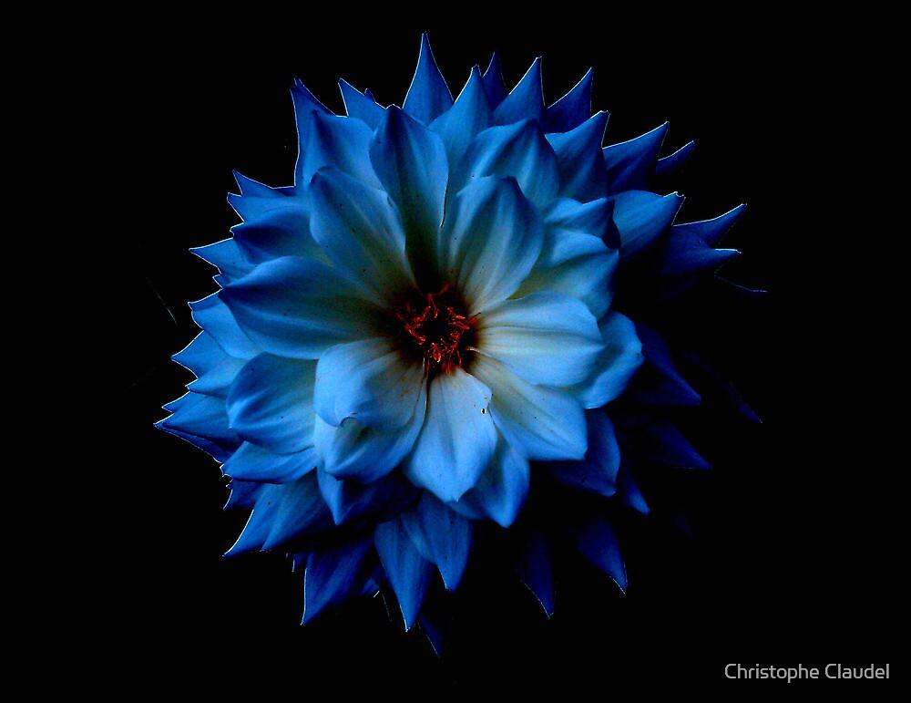 Dahlia by Christophe Claudel