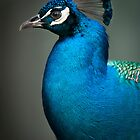 Peacock Subtlety  by J Jennelle