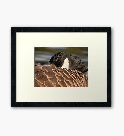 Wild goose Framed Print