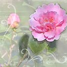 Dreaming of camelias by almaalice