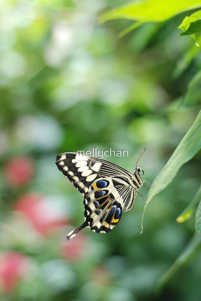 butterfly in green by mellychan