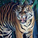 Roar of a tiger ! by miroslava