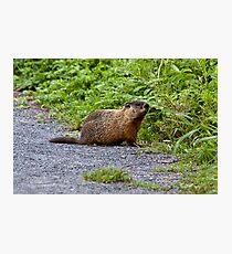 Groundhog Photographic Print