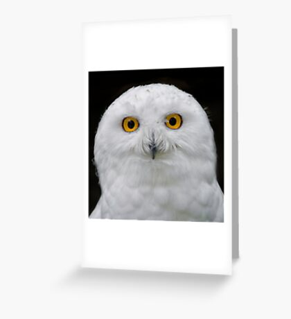 Male Snowy Portrait Greeting Card