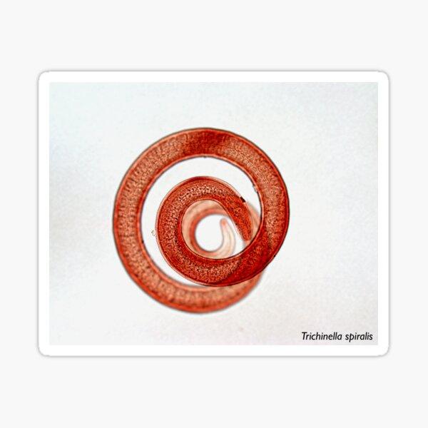 Trichinella spiralis Sticker