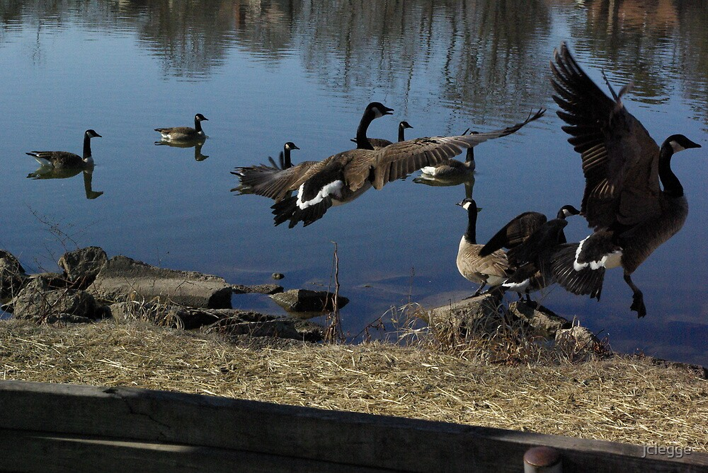 taking flight by jclegge