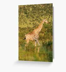 reticulated giraffe - pilanesburg, south africa Greeting Card
