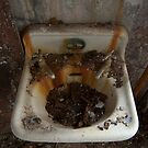rusty sink by DariaGrippo