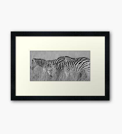 black stripes, white stripes Framed Print