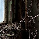 vines & radiator by DariaGrippo