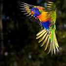 Rainbow Lorikeet by TonySlattery