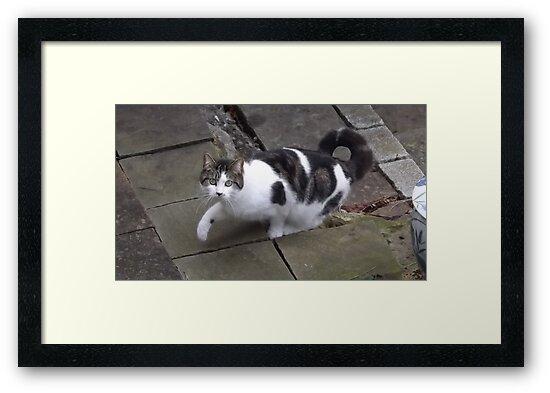 Nextdoor neighbour cats/(1 of 2) -(240212)- digital photo by paulramnora