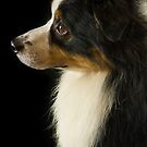 His Masters Voice by Chris Cardwell