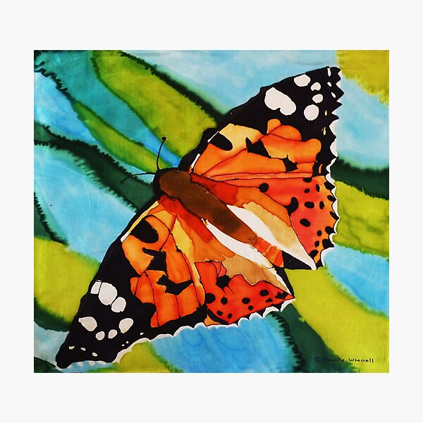 Painted lady butterfly on silk Photographic Print