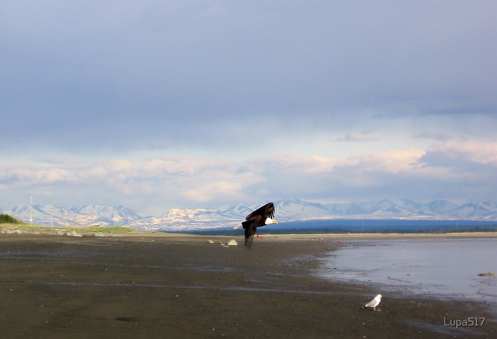 Bald Eagle Soaring by the Mountains by Lupa517