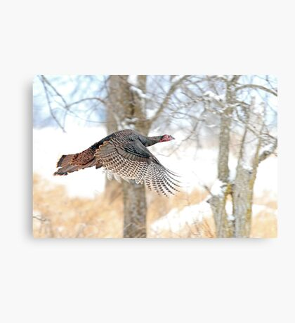 As God as my Witness... Wild Turkeys can fly! Metal Print