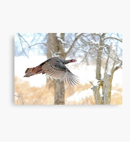 As God as my Witness... Wild Turkeys can fly! Canvas Print