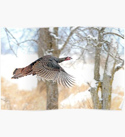 As God as my Witness... Wild Turkeys can fly! Poster