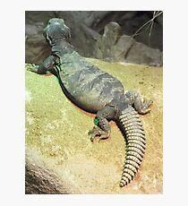 London Zoo/Reptile House -(190212)- digital photo Photographic Print