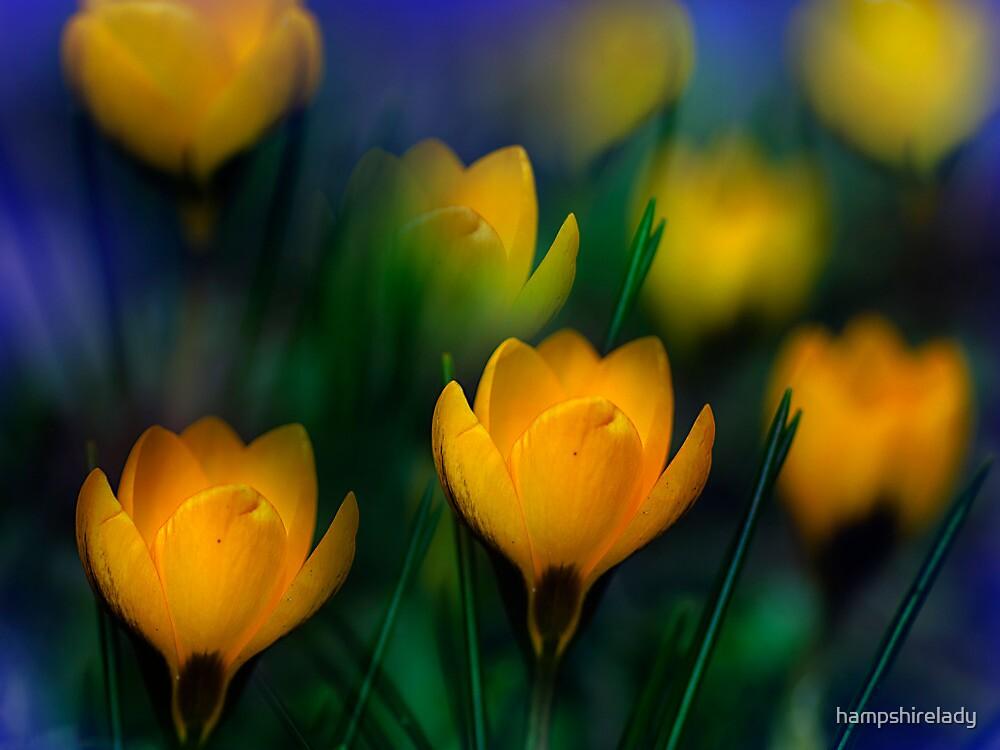 Spring Promise by hampshirelady