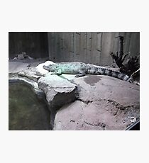 London Zoo/Crocodile/(1 of 2) -(190212)- digital photo Photographic Print