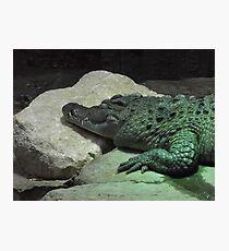 London Zoo/Crocodile/(2 of 2) -(190212)- digital photo Photographic Print