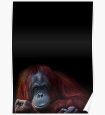 Orangutan Chicks dig me Poster